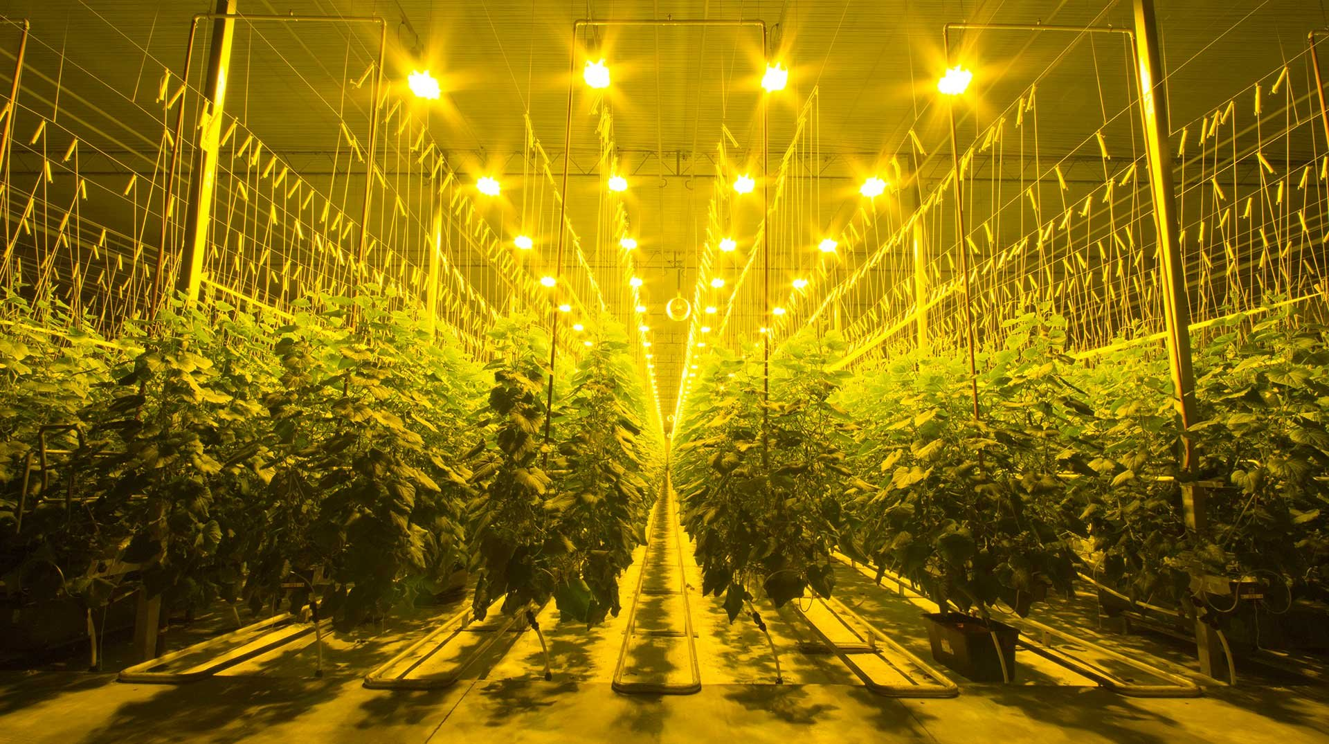ohio grow lights header
