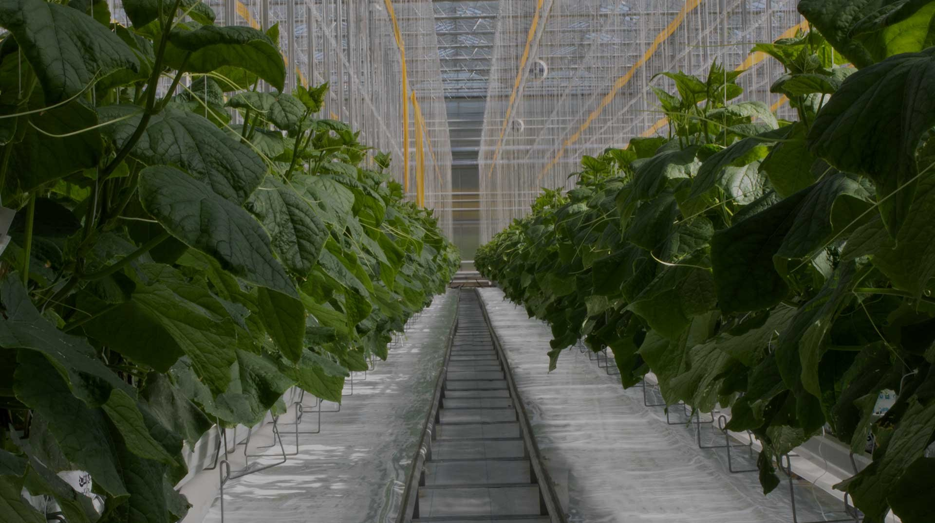why greenhouse grown header image optimized