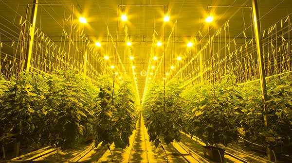 ohio grow lights index image