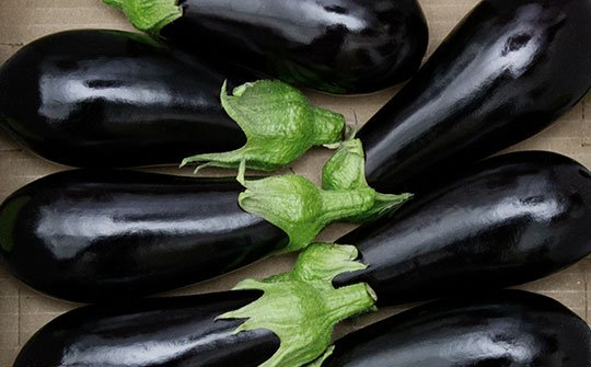 eggplant gallery bottom middle