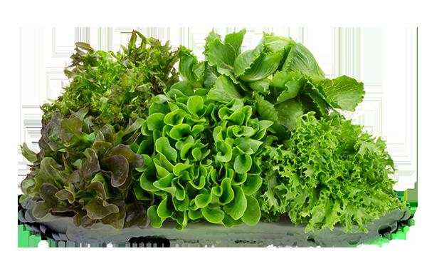 Naked Leaf Living Lettuce Loose Product Shot