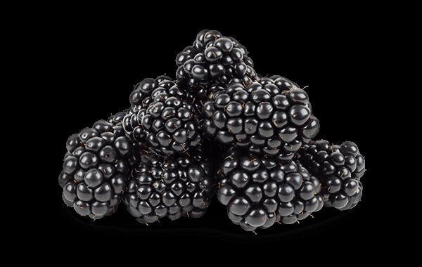 Product-IMG_Smuccies-Blackberries_rev5.png