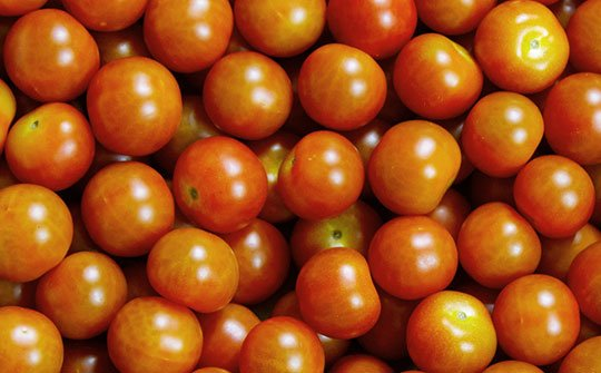 tomato x gallery bottom middle