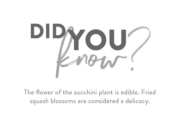 zukies mini zucchini did you know 01