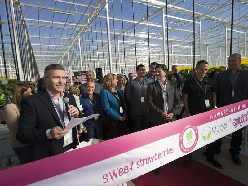 Joe Spano, left, vice-president of sales and marketing at Mucci Farms in Kingsville, gives remarks during a ribbon-cutting ceremony to unveil Phase 2 of the 36-acre strawberry farm expansion on Oct. 26, 2017.