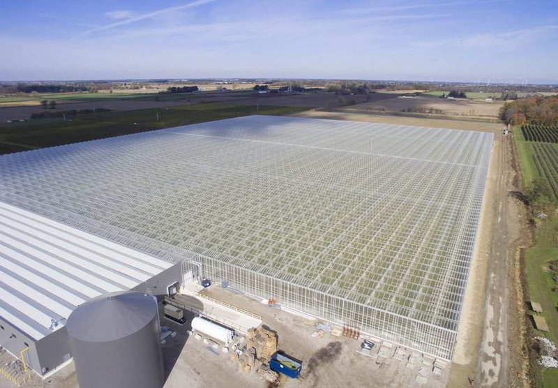 This aerial view shows the 36-acre strawberry farm expansion at Mucci Farms in Kingsville.